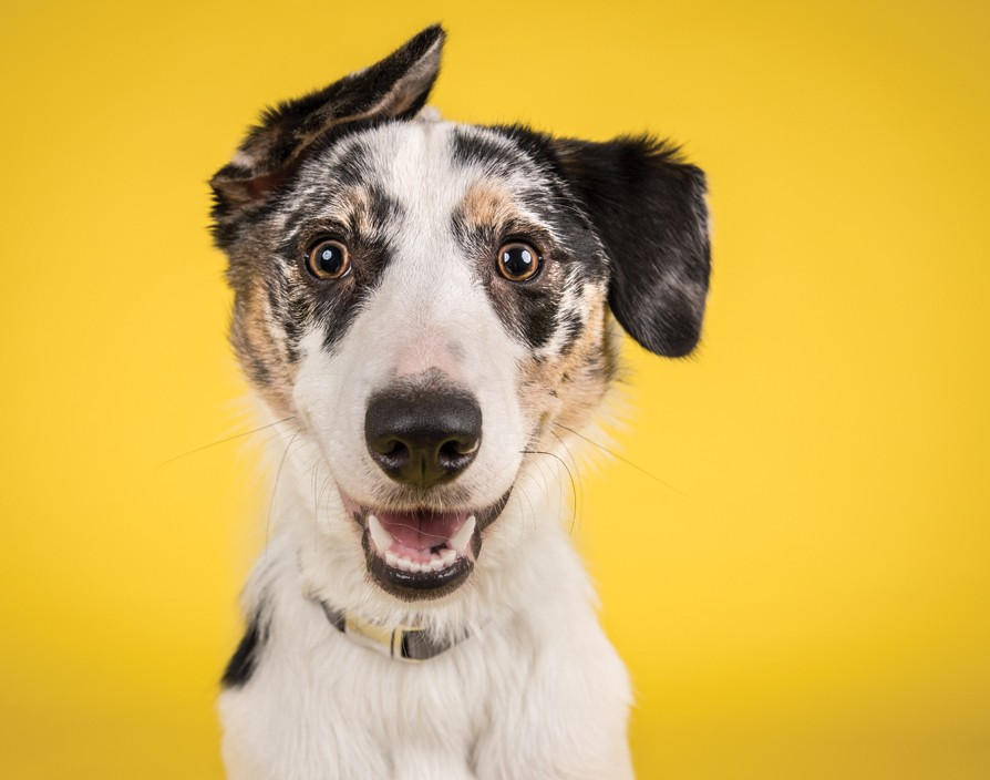 Tails.com is transforming pet food one bite at a time